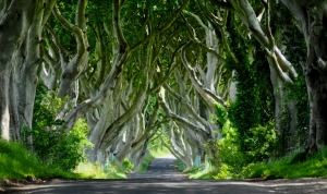 GOT - Dark Hedges of Armoy